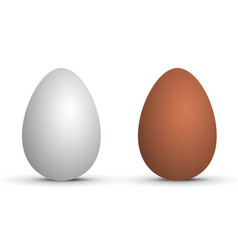 Two realistic eggs vector