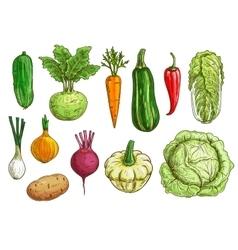 Vegetable isolated sketch set for food design vector