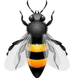 Wasp vector