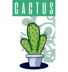 Cactus house plant vector