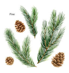 christmas set with green pine branches and vector image