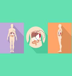 human spleen icons set flat style vector image