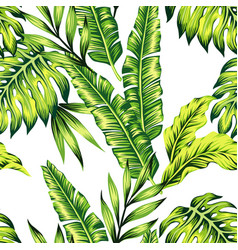 tropical plants seamless background vector image