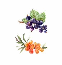 watercolor berries set vector image
