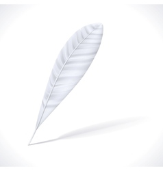 White Feather vector image vector image