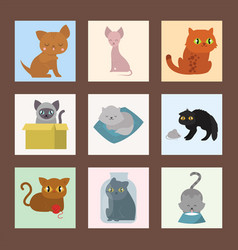 cute cats cards character different pose funny vector image vector image