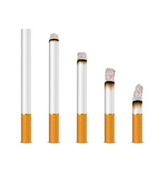 3d realistic cigarette set closeup isolated vector