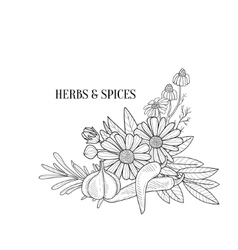 Herbs And Spices Bouquet Hand Drawn Realistic vector image