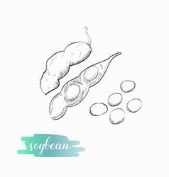 Soybean pod sketch vector