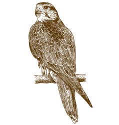 Engraving drawing falcon vector