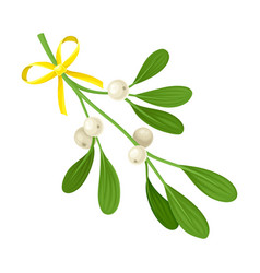 Mistletoe twig with berries tied with festive silk vector