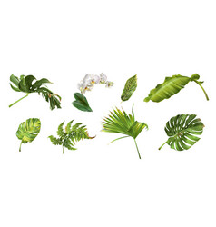 tropical plants set vector image