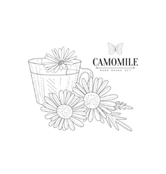 Camomile Herbal Tea Hand Drawn Realistic Sketch vector