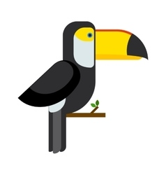 Toucan ramphastos toco sitting on tree branch and vector image