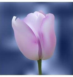 Realistic colorful tulip vector image