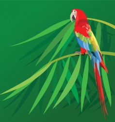 parrot on bamboo vector image
