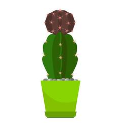 cactus in green flower pot vector image