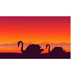scenery swan at sunset silhouettes vector image