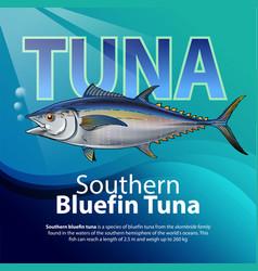 bluefin tuna vector image