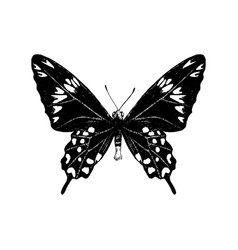 hand drawn crimson rose butterfly vector image