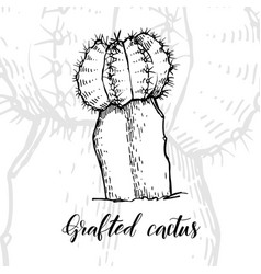 Hand drawn grafted cactus vector