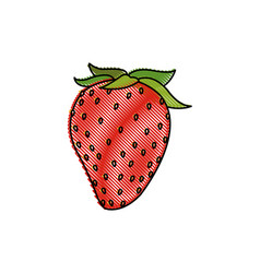 draw strawberry fruit fresh food design vector image