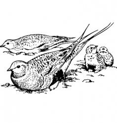 Bird syrrhaptes paradoxus vector