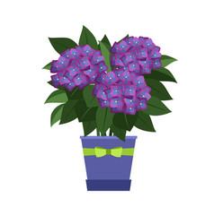 hydrangea house plant vector image vector image