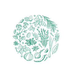 hand drawn herbs and spices in circle shape vector image