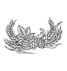 Hops and barley sketch engraving vector
