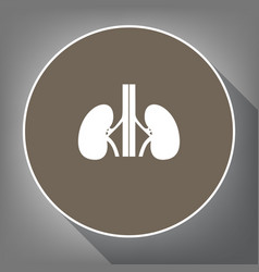human anatomy kidneys sign white icon on vector image