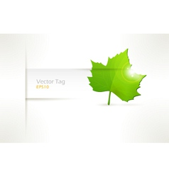 Label with green leaf vector