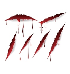Bloody scratches and blood drops vector