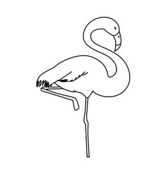 flamingo exotic bird vector image