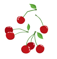 cherry berry with leaves isolated on a white vector image