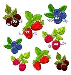 Strawberry raspberry blueberry and blackberry vector image