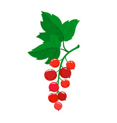 cartoon red currant berries with green leaves vector image