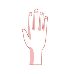 human hand palm show five finger vector image