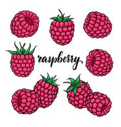 set beautiful cartoon pink raspberry vector image
