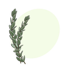 two beautiful hand drawn eucalyptus twig branch vector image