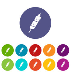 dried wheat ear icons set flat vector image vector image