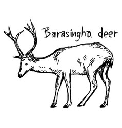Barasingha deer - sketch hand drawn vector