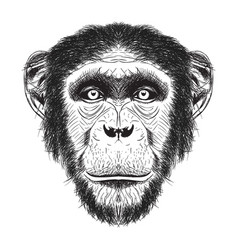 Chimpanzee han drawn sketch vector