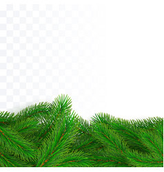green fir branches border christmas tree twig vector image