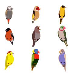 little birds set amadin bullfinch canary vector image