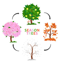 Tree in four seasons - spring summer autumn vector