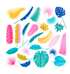tropical plants leafs summertime nature objects vector image