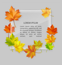 glass banner with colorful autumn maple vector image vector image