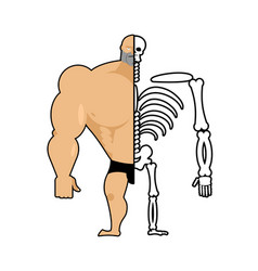human structure half body and skeleton anatomic vector image vector image