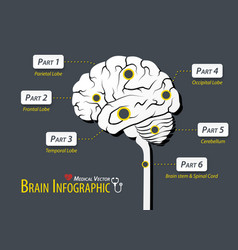 Brain infographic flat design vector